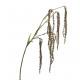 Plastik Amaranthus Zweig, Länge 104cm, 6 Tips, grü